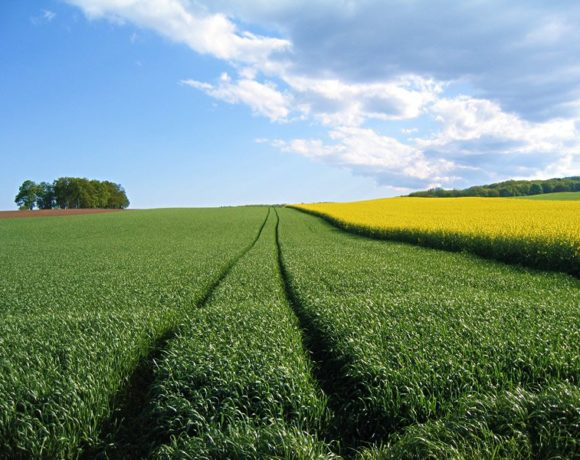 Le libéralisme ne doit plus diriger notre agriculture